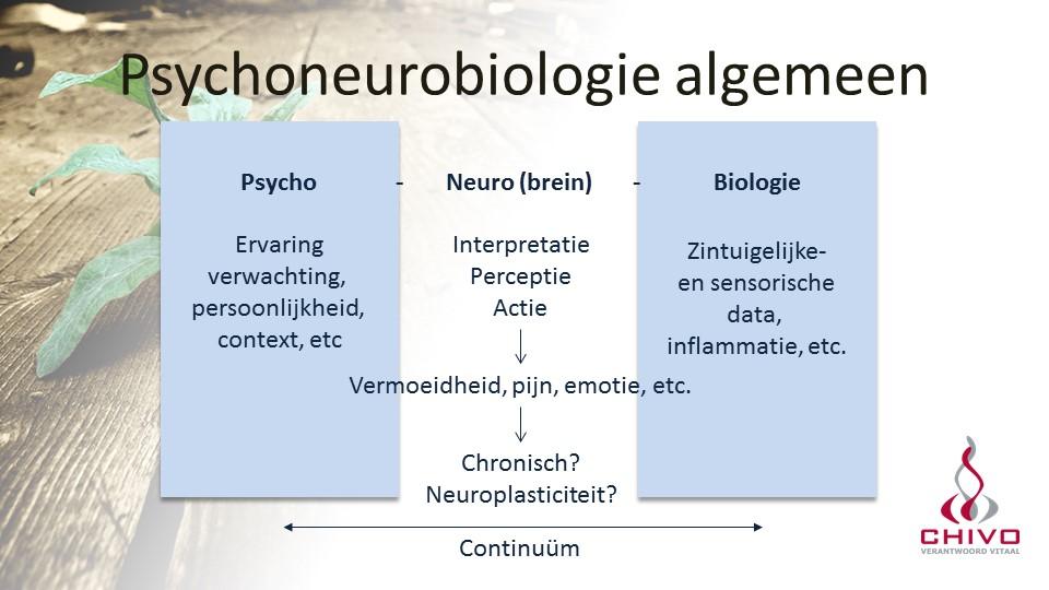Het psychoneurobiologisch model is een continuum, waarin de onderdelen samenwerken, maar waar het neurodeel (het brein) een centrale rol speelt.