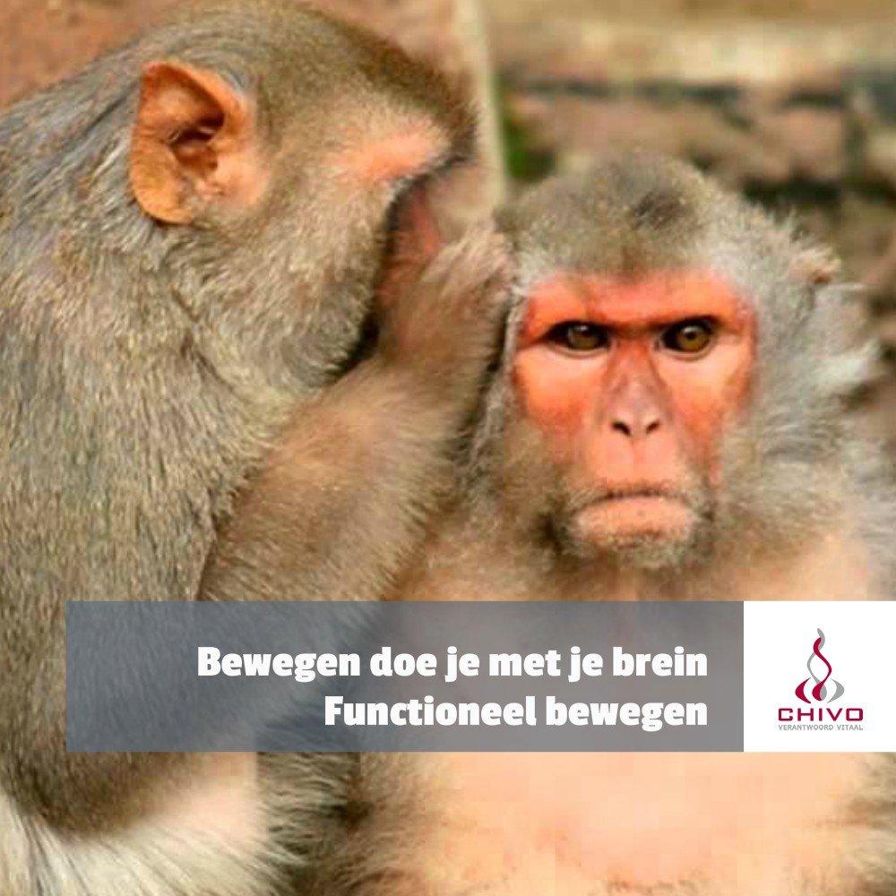 Beweeg niet als een aap, maar als een mens